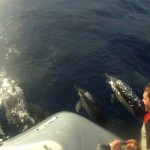 Filming with dolphins in the Azores
